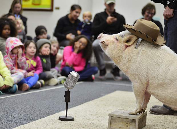Mudslinger cozies up to the microphone during the Top Hogs animal trick show Wednesday at the Summit County Library's Main Library in Frisco.