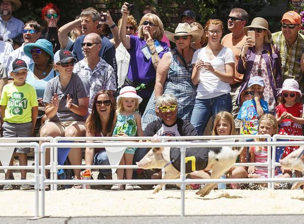 Fans cheer on the pig races during the annual Colorado BBQ Challenge event Friday, June 16, on Main Street in Frisco.