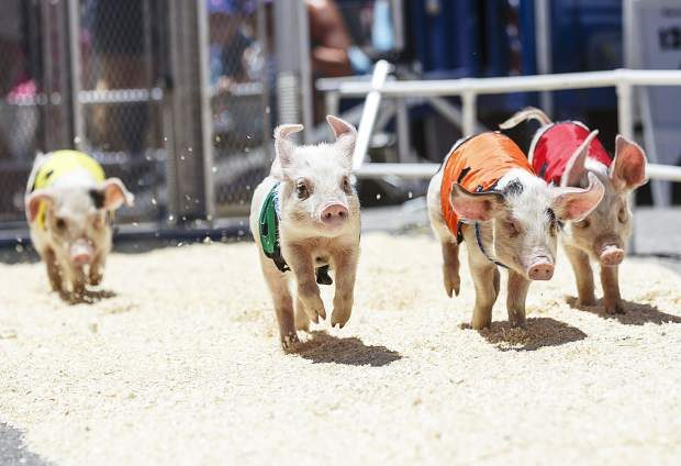 Summit 360 video: Colorado BBQ Challenge hosts pig races, family entertainment