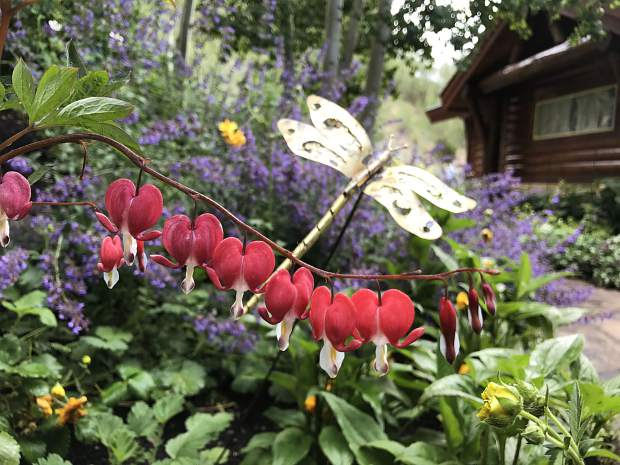 Bleeding hearts and a metal dragonfly adorned this side garden in Silverthorne.