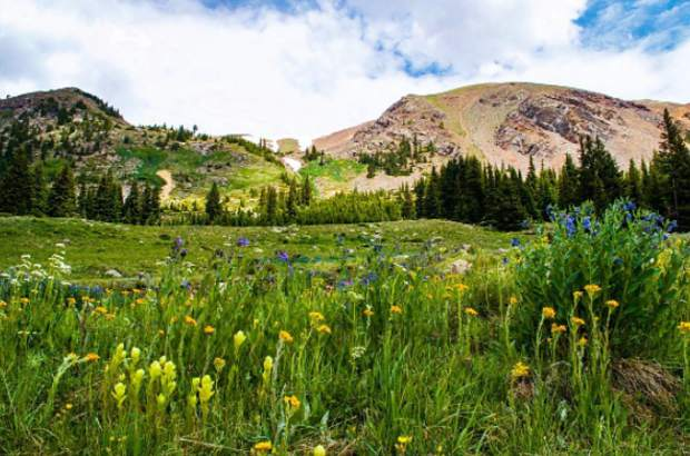 Wildflowers and rugged peaks found behind Keystone. It's peak wildflower season in Summit County. Submit your wildflower photos to share@summitdaily.com or use our hashtag, #exploresummit.