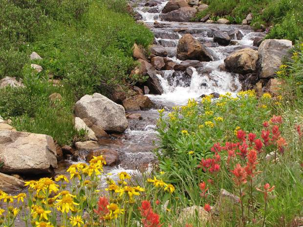 The wooly groundsel and indian paintbrush are now in full display along the Upper Straight Creek trailhead north of Silverthorne. It's peak wildflower season in Summit County. Submit your wildflower photos to share@summitdaily.com or use our hashtag, #exploresummit.