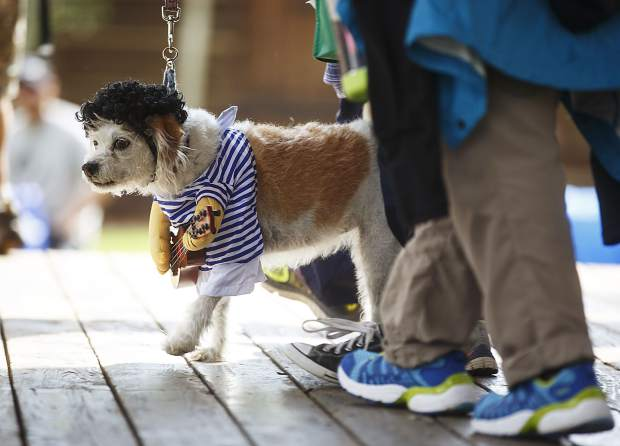Izzy, a Jack Russell mix breed in a costume, participates in the Canine 4K race on Frisco's Main Street Saturday, Aug. 5.