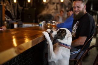 Dog-friendly breweries in Breckenridge, Frisco and throughout Colorado