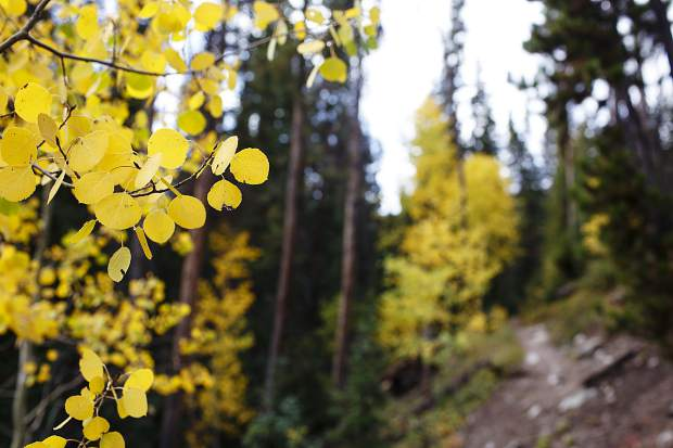 Signs of autumn in the Eagles Nest Wilderness Saturday, Sept. 16, near Silverthorne.
