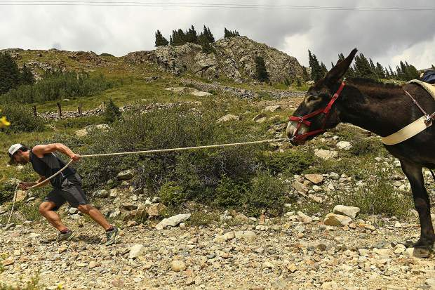 Tim Scaturro, of Lakewood, pulls hard to get his donkey Charlie to move as the two head up the rocky road toward Mosquito Pass as they take part in the 70th annual World Championship Pack Burro Race on Sunday in Fairplay. Each runner must lead his donkey with a 15 foot lead rope and the donkey must carry 33 pounds in its pack. The runner is allowed to push, pull, drag or carry the burro but is not allowed to ride it.