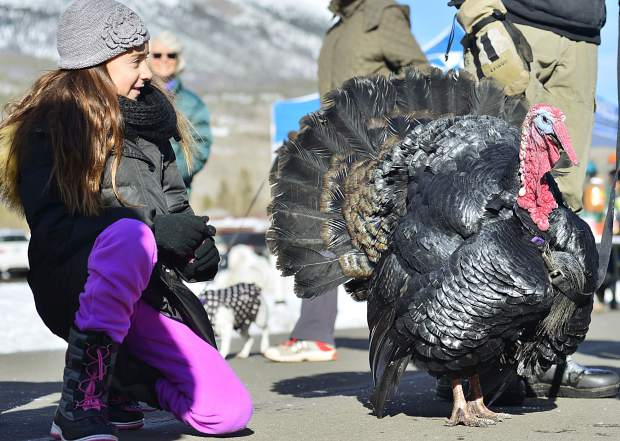 Lillian Beck of Atlanta pets a turkey Thursday at the sixth annual Turkey Day 5k Fun Run in Frisco.