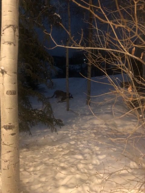 Edwards man comes face to face with mountain lion