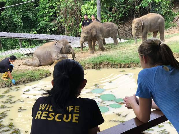Devon Galpin, right, looks on with local wildlife protectors as baby elephants congregate nearby at an elephant sanctuary in Borneo.