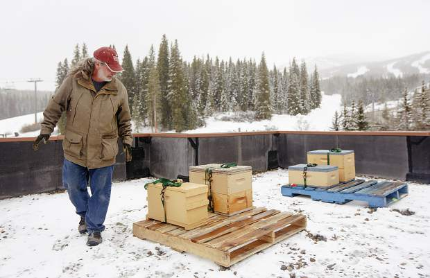 Beekeeper manages the four colonies of honey bees on the rooftop of Beaver Run Resort and Conference Center Thursday, May 23, in Breckenridge. The bees will produce honey for sale at the resort, and contribute to the resort's renewed mission to increase sustainability.
