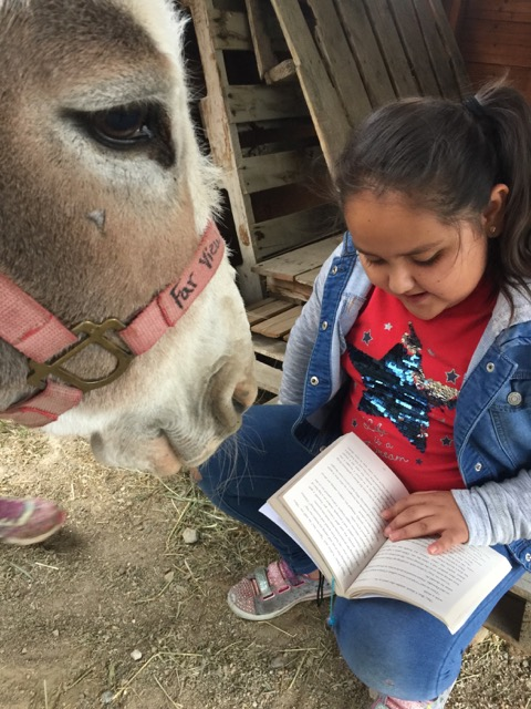 Read With a Donkey program encourages kids to read with a nonjudgmental friend