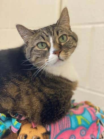Pet Scene: Summit County's adoptable pets for the week of August 9, 2020